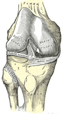 Right knee-joint, from the front, showing inte...